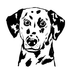 Young dalmatian vector hand drawn illustration. Spotted dog portrait.
