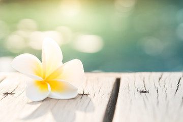Photo sur Plexiglas Frangipanni Frangipani plumeria Spa Flower on wooden floor near the pool