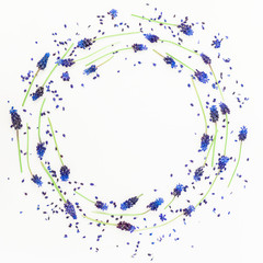 Round frame made of blue muscari and petals, floral pattern on white background. Flat lay, top view. Floral frame. Frame of flowers. Flowers frame wreath