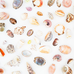 Natural pattern of exotic sea shells isolated on white background. Flat lay. Top view. Ocean background