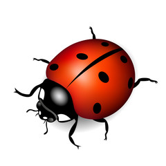 Summer  ladybug for design