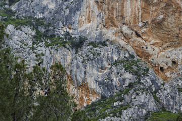 Fototapete - Close-up of an overgrown mountain at Desfiladero de los Gaitanes