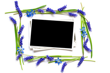 blank photo in a frame of spring blue flowers