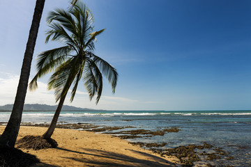 View of the beach with palm trees in Puerto Viejo de Talamanca, Costa Rica; Concept for travel in Costa Rica