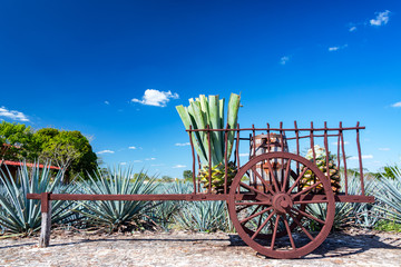 Blue Agave on a Wagon