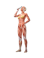 Femal muscle anatomy searching with magnifying glass 3D Illustration