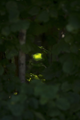 hazel,leaf,lleaves,forset,woods,tree,sunbeam