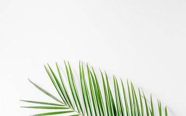 Trendy design with green herbs pattern on white background top view mock up