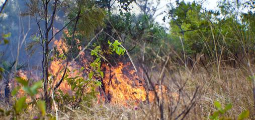 Wild Fire in Kakadu National Park   Australia