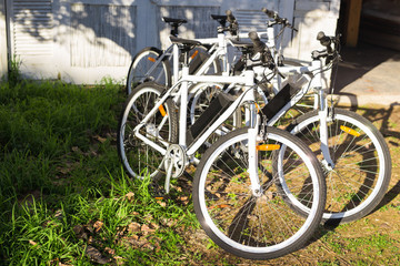 Bicycles on summer