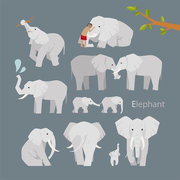 various elephant poses illustration flat design set