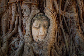 Famous Image Buddha Head Wraooed by Banyan Tree Root at Wat Mahathat Temple in Ayutthaya Historical Park, a UNESCO world heritage site, Thailand