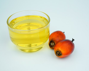 Palm and oil palm on white background.