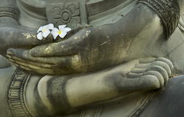 flower on buddha hand