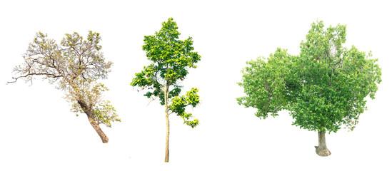 Isolated tree on white background.
