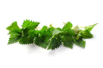 Nettles in a row isolated