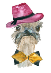ostrich. animal, watercolor.