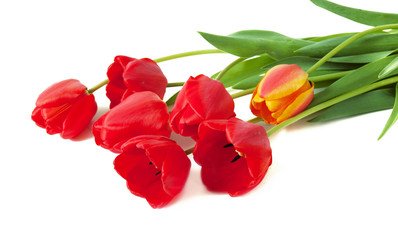 Tulips bunch isolated on white background