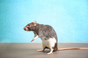 Cute funny rat on wooden table against color background