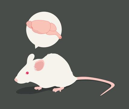 Rat Brain vector illustration