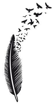 Große Feder aus der Vögel fliegen. Vogelschwarm.