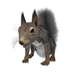 3D Rendering Eastern Grey Squirrel on White