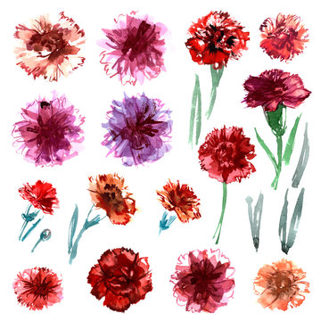 Set of watercolor hand painted carnations isolated on a white background