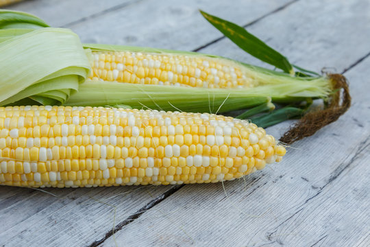Freshly picked bicolor sweet corn on a wooden background.