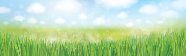 Vector green grass  and blue sky  nature background.