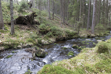 Beautiful Wilderness from the spring Mountains Sumava in southern Czech