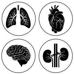 Human organs black icon vector eps 10