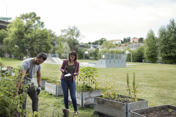 Mid adult man and woman examining plants in urban garden