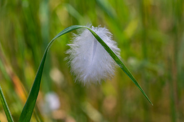 Piuma appesa ad un filo d'erba