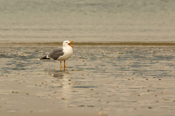 Seagull perched by the sea