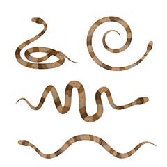 Collection of Brown Poisonous Snakes or Pythons Isolated