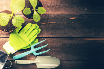 gardening tools and plants on old wooden background with copy space
