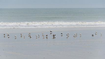 Foto auf Gartenposter Antarktika Birds on the beach