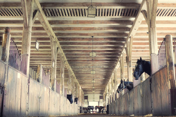 horses in their stalls, high noise, vintage effect