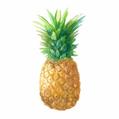 Watercolor pineapple on white.