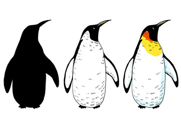 Vector penguin set illustration - colored and outlines, silhouette. Hand drawn sketch of wild animal. Animals in the wild thematic drawing