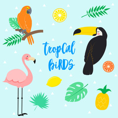 Vector tropical elements on white background
