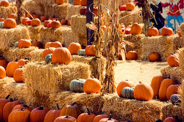 Pumpkin Patch Display on Hay Bales