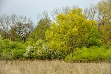 Kolory wczesnej wiosny