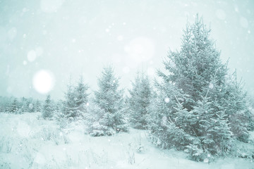 snowy winter landscape in the Christmas forest