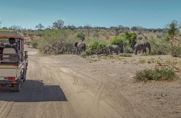 Tourists watch a herd of elephants in national park Chobe, Botswana