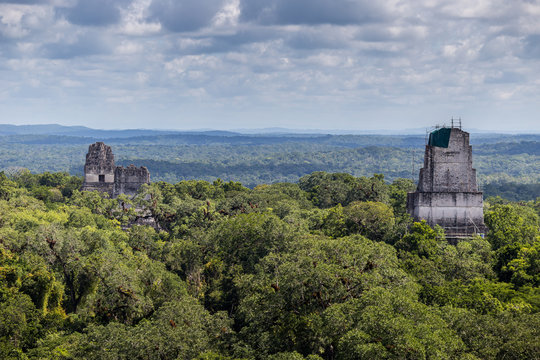 Tops of Mayan ruins peek over tops of trees in Tikal Guatemala