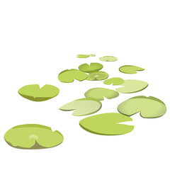 Group vector water lilies floating on water surface. Green low poly water lily. Water plants in different variant, isolated on white background. Isometric clumps growing on edge of pool and pond.