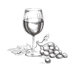 Glass of wine with grape. Hand drawn wine concept
