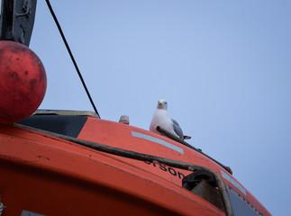 Möwe, sitzt, ausruhen, pause, schiff, Rettungsboot, Fähre, Vogel, Seevogel