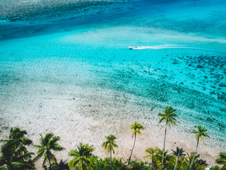 Boat on sea by palm trees, Mo'orea, South Pacific